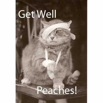 getwellcat