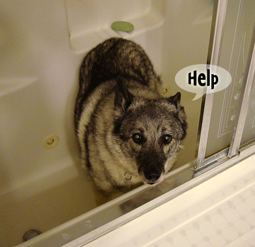 holly-dog-in-bathtub