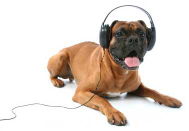 dog-with-headphones